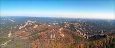 A view of trees damaged by black mountain beetles (Dendroctonus ponderosae) in the Black Hills National Forest in South Dakota. Credit: flickr.com (Chris M. Morris CC Attribution).