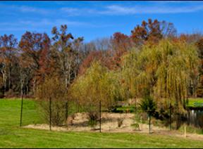 Fall colors on display at Bayne Park in Harding Township, NJ.