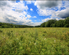 The panoramic landscape at the Great Swamp National Wildlife Refuge. Credit: A. Kaufman, 2011