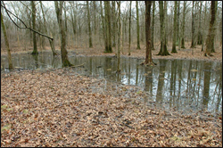 One of the vernal pools at GSWA's Conservation Management Area (CMA) in Harding Township, NJ.