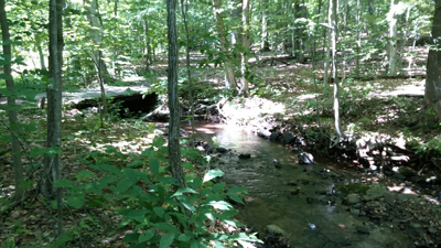 Primrose Brook in Jockey Hollow continues to have low E. coli during all but the heaviest rains. Credit GSWA/A. Ostella. 6/24/2015