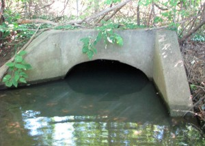The sample at LBE was collected from where this culvert meets Loantaka Brook (photo taken on 8/27/2015)
