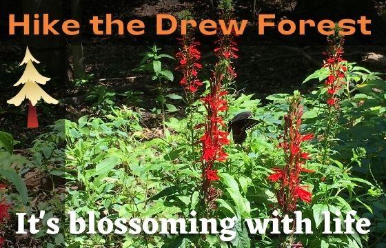 GSWA Drew Forest Hike